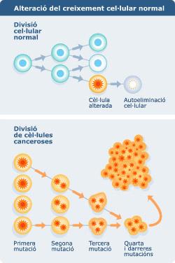 cèl·lula