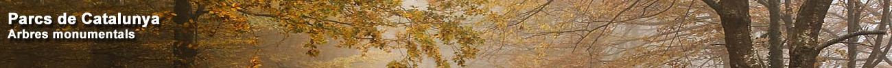 http://parcsnaturals.gencat.cat/es/coneixeu-nos/arbres-monumentals/